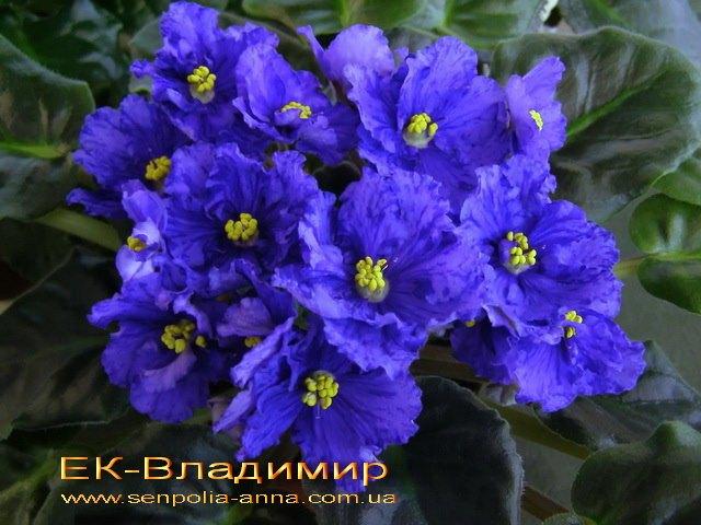 http://senpolia-anna.com.ua/tmp/p/00336.jpg